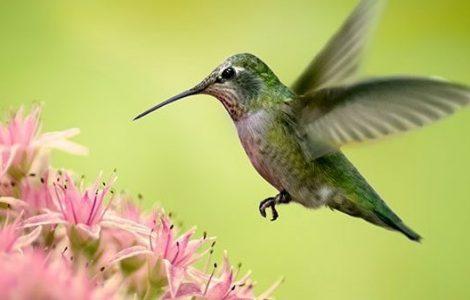 cropped-hummingbird-72dpi