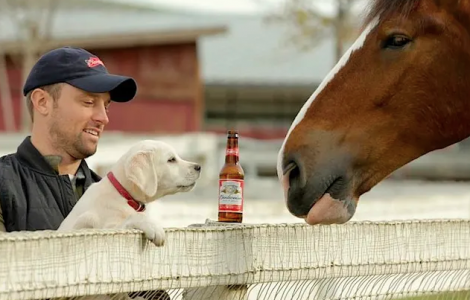 horse and puppy